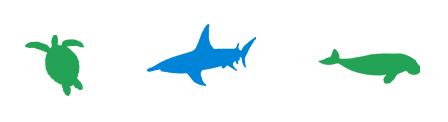 Hai Forschung Ocean Wildlife Project Meeresschutz Ozeanschutz Haischutz Meer Ozean Wildtiere Naturschutz Spenden schützen forschen Haiforschung Projekte